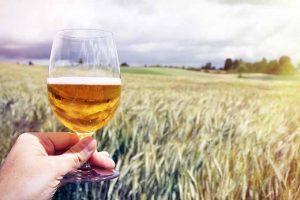 Fabricación de Cerveza